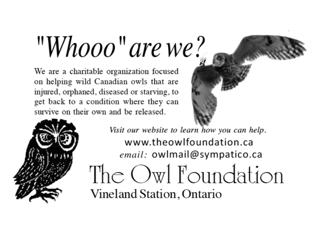 The Owl Foundation