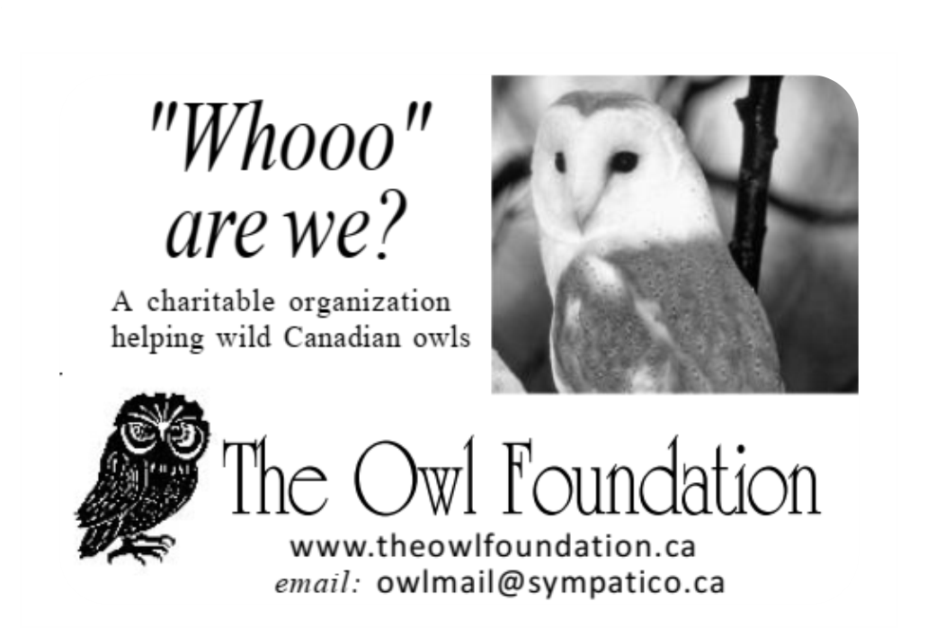 The-Owl-Foundation-New